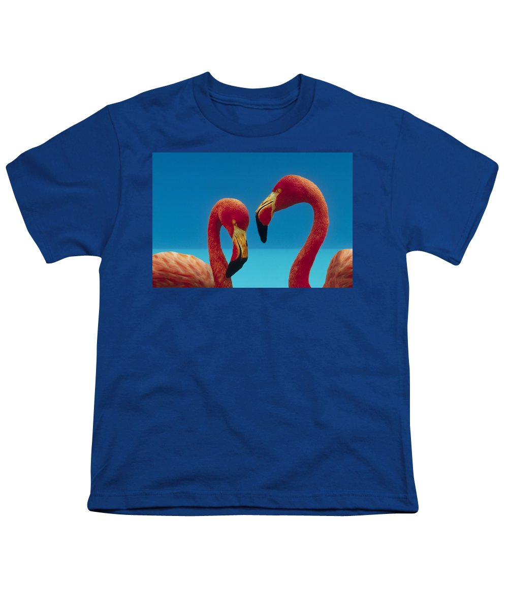 00172310 Youth T-Shirt featuring the photograph Greater Flamingo Courting Pair by Tim Fitzharris