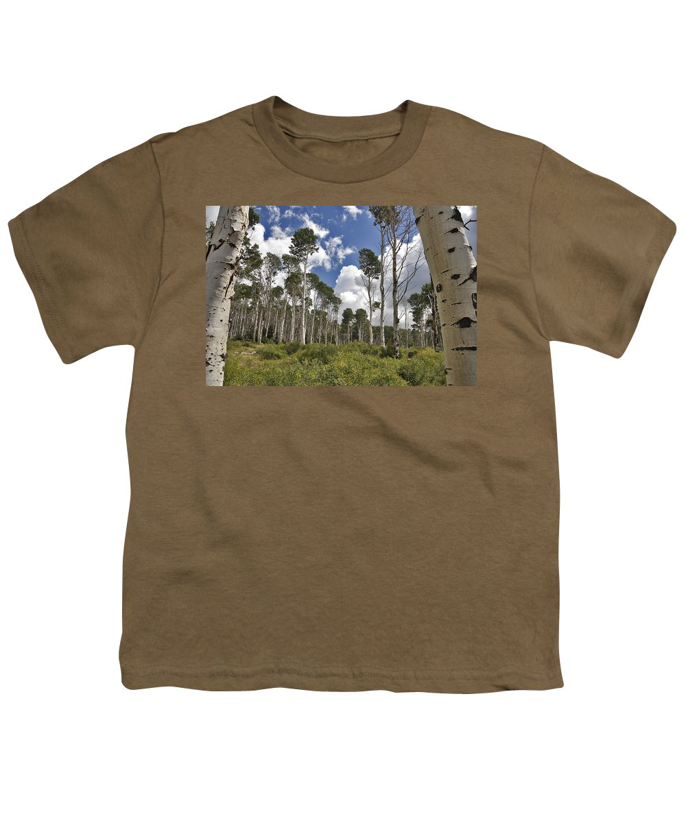 3scape Photos Youth T-Shirt featuring the photograph Aspen Grove by Adam Romanowicz