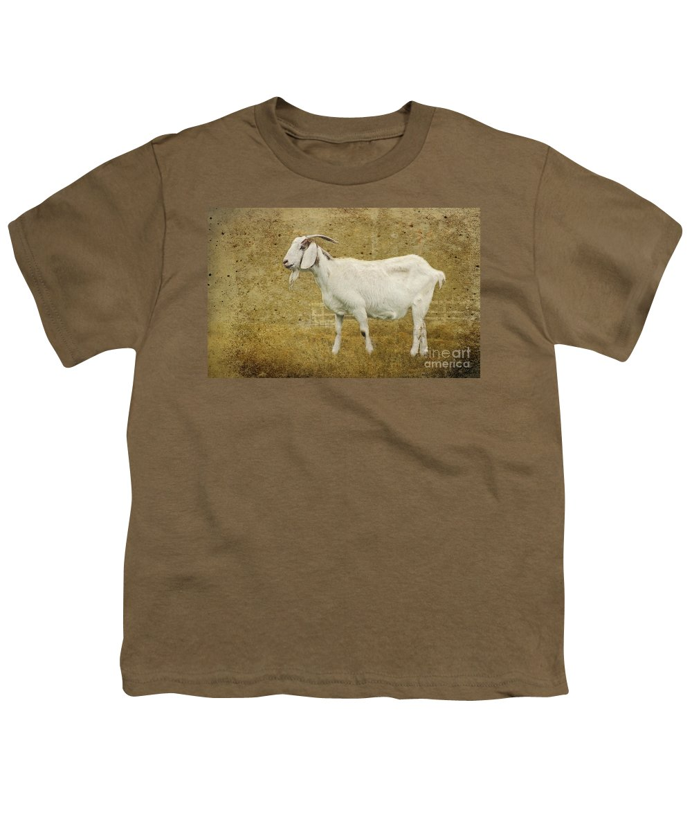 Goat Youth T-Shirt featuring the photograph Billy Goat Gruff by Betty LaRue