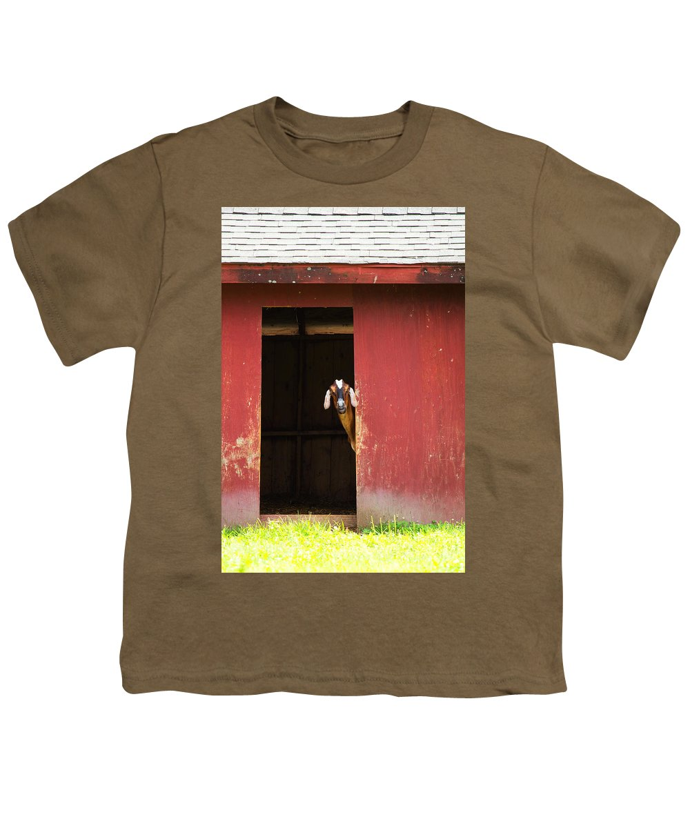 Goat Youth T-Shirt featuring the photograph Goat In Barn by Stephanie McDowell