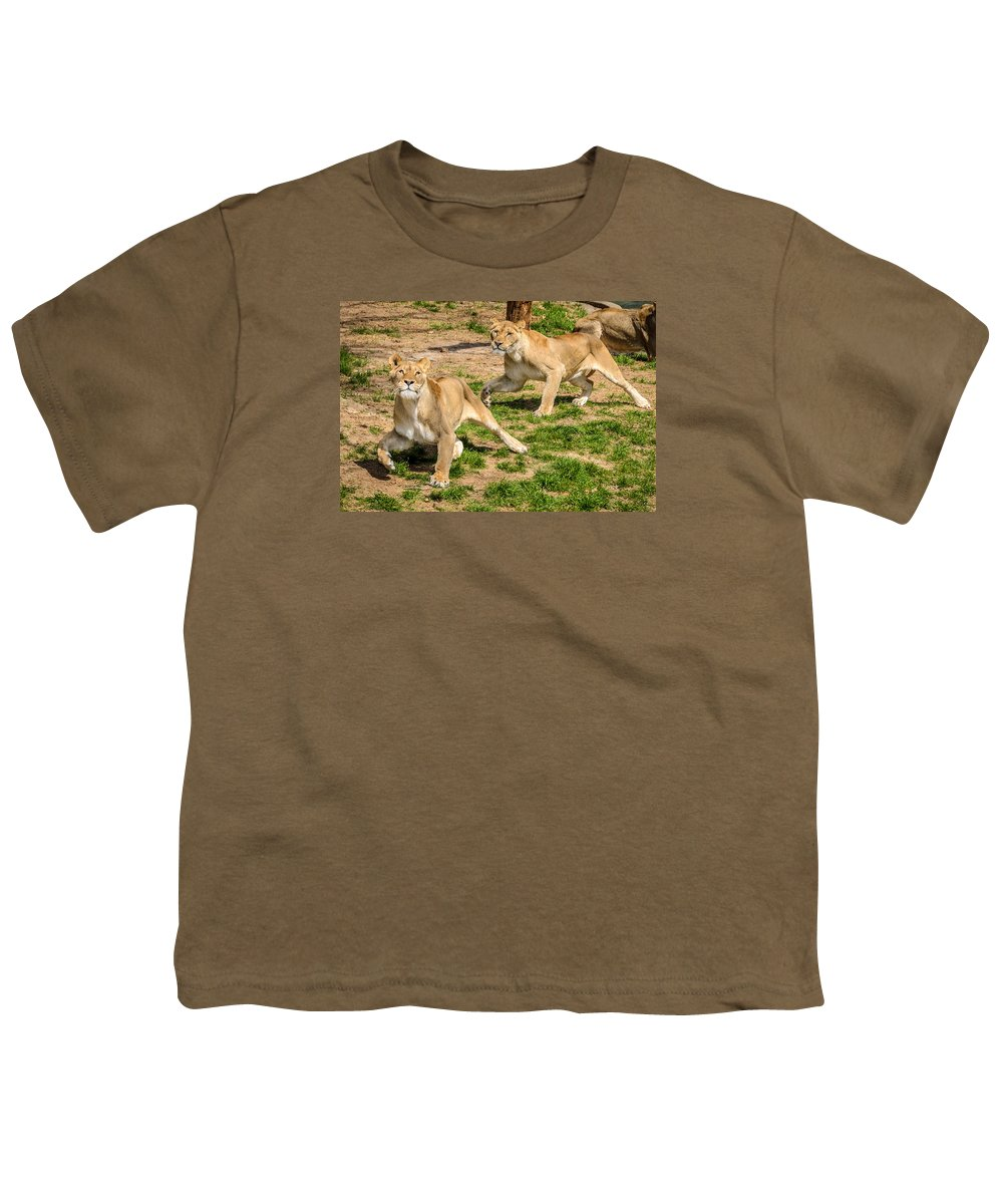 Lion Youth T-Shirt featuring the photograph Hokie Pokie by Pat Scanlon