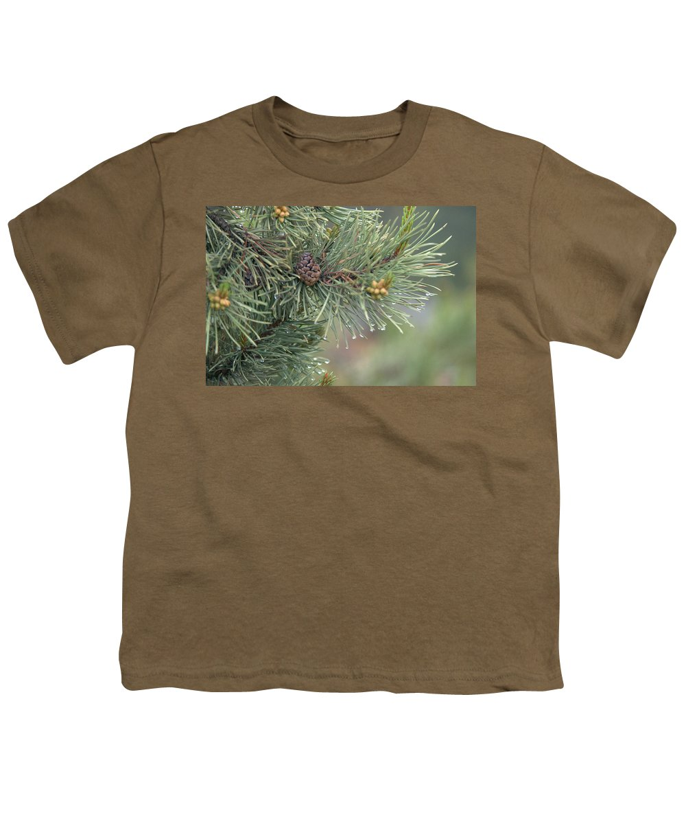 Pine Youth T-Shirt featuring the photograph Lodge Pole Pine In The Fog by Frank Madia