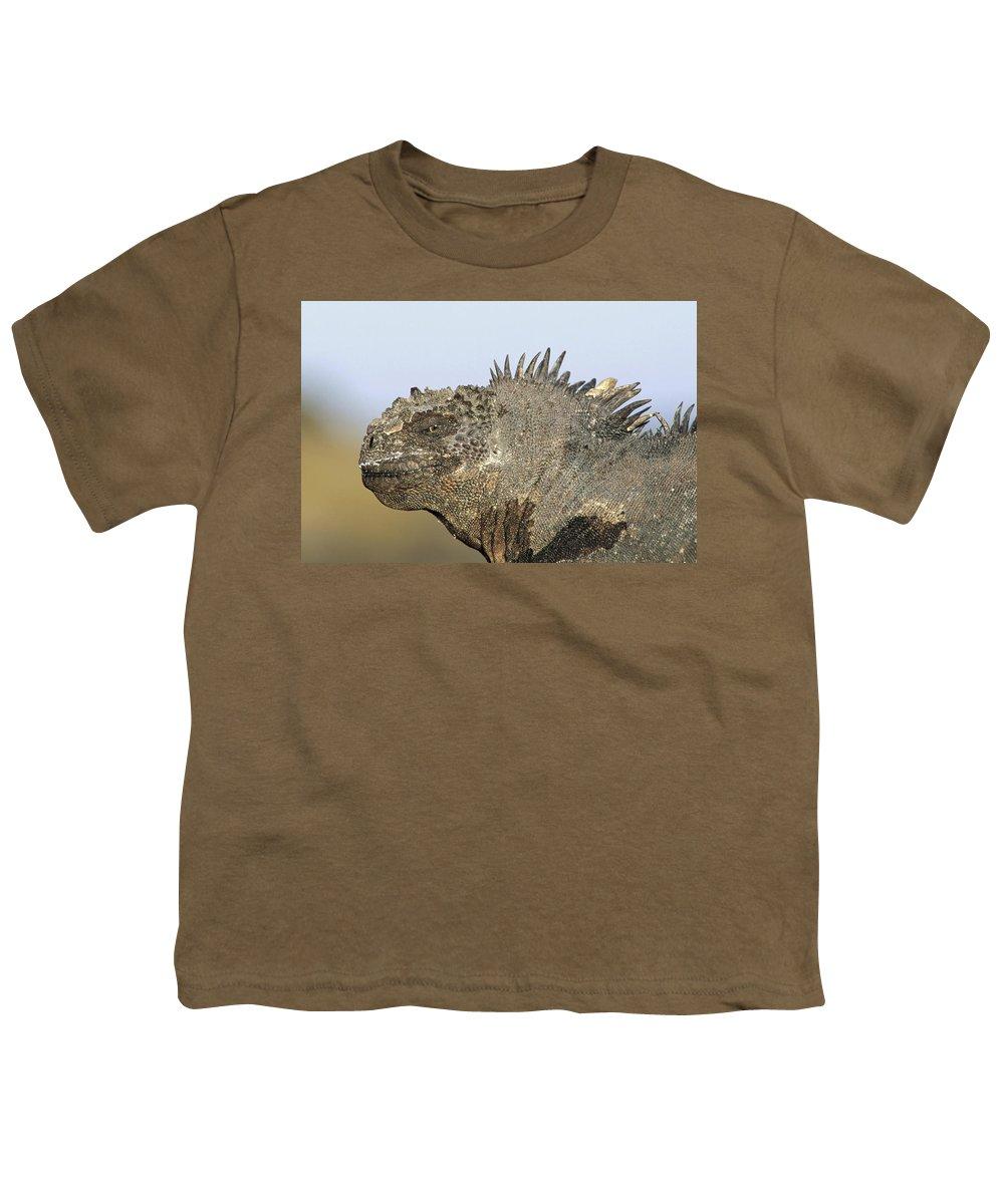 Feb0514 Youth T-Shirt featuring the photograph Marine Iguana Male Santa Cruz Island by Tui De Roy