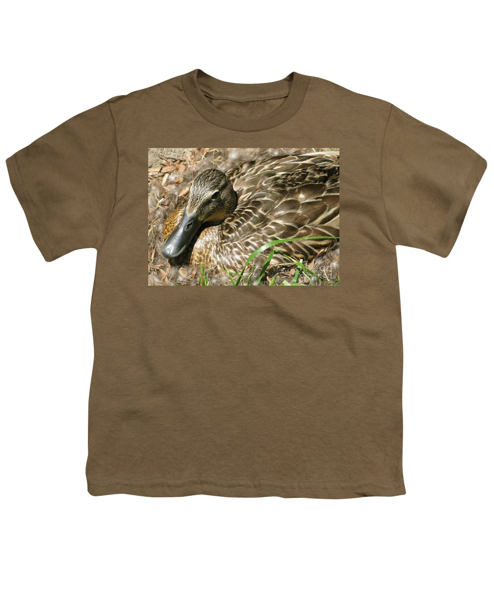Mallard Youth T-Shirt featuring the photograph Nesting Mallard by Ann Horn