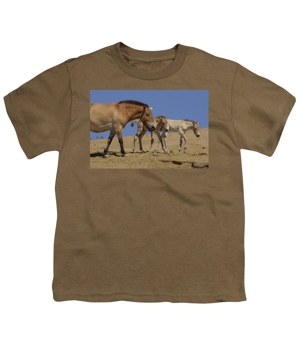 Feb0514 Youth T-Shirt featuring the photograph Przewalskis Horse With Two Foals by San Diego Zoo