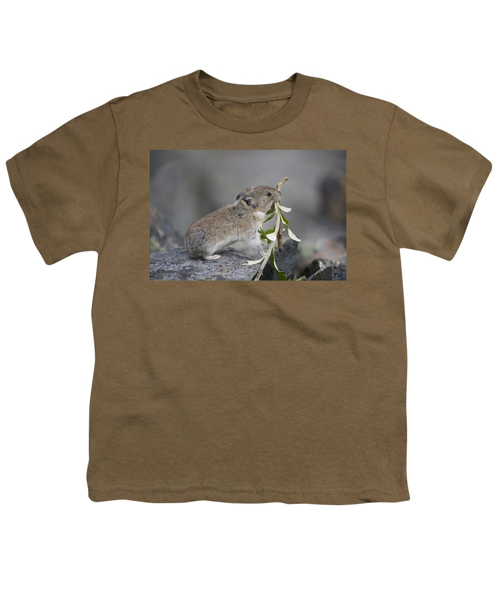 Mp Youth T-Shirt featuring the photograph American Pika by Michael Quinton