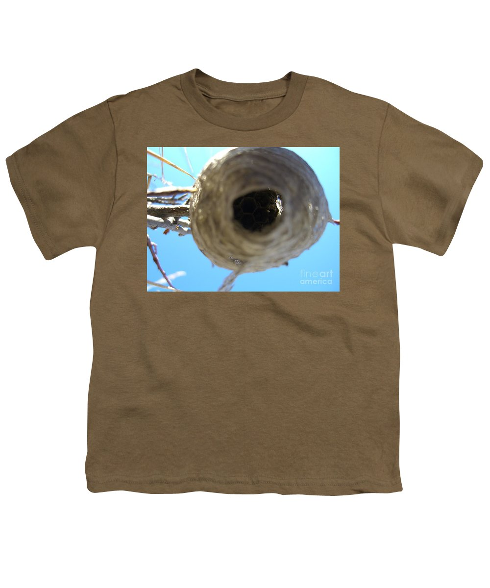 Photograph Bee Hive Blue Sky Branch Insect Youth T-Shirt featuring the photograph Bee Hive by Seon-Jeong Kim