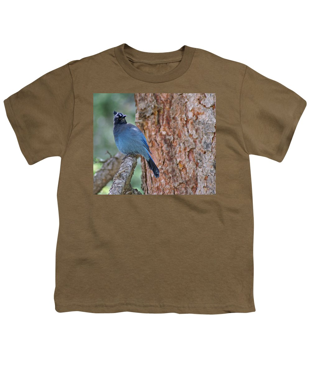 Blue Jay Youth T-Shirt featuring the photograph Blue Jay by Heather Coen