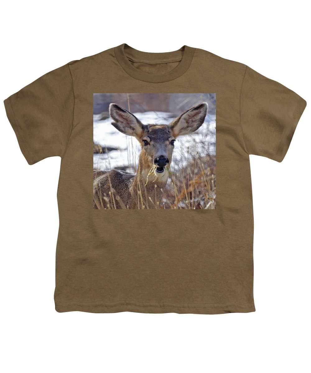 Doe Youth T-Shirt featuring the photograph Doe by Heather Coen