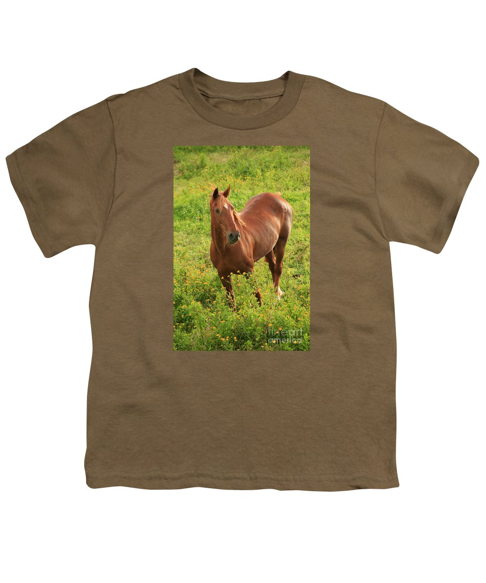 Animals Youth T-Shirt featuring the photograph Horse In A Field With Flowers by Gaspar Avila