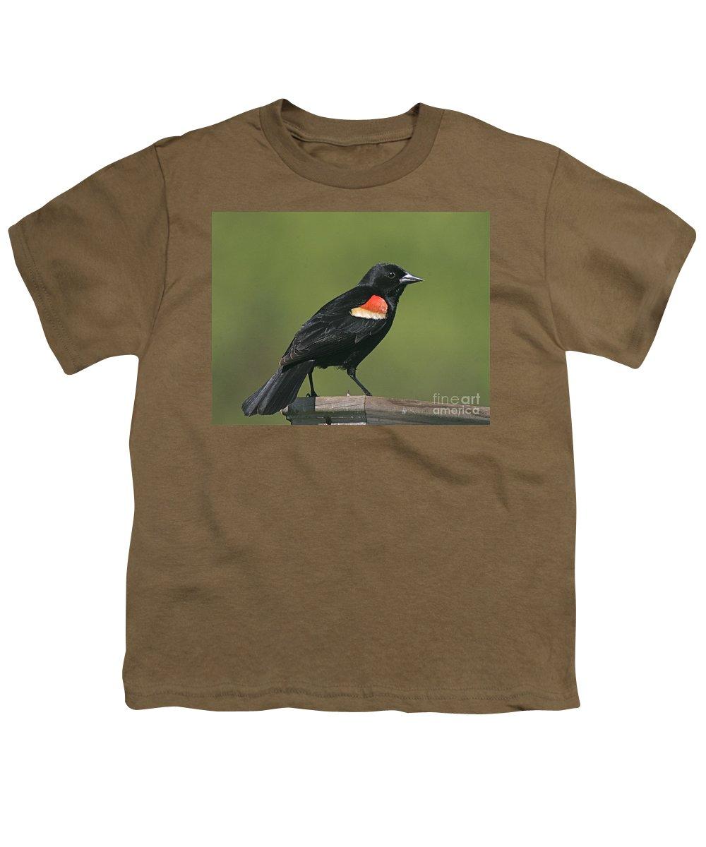 Bird Youth T-Shirt featuring the photograph Mr Blck Bird by Robert Pearson