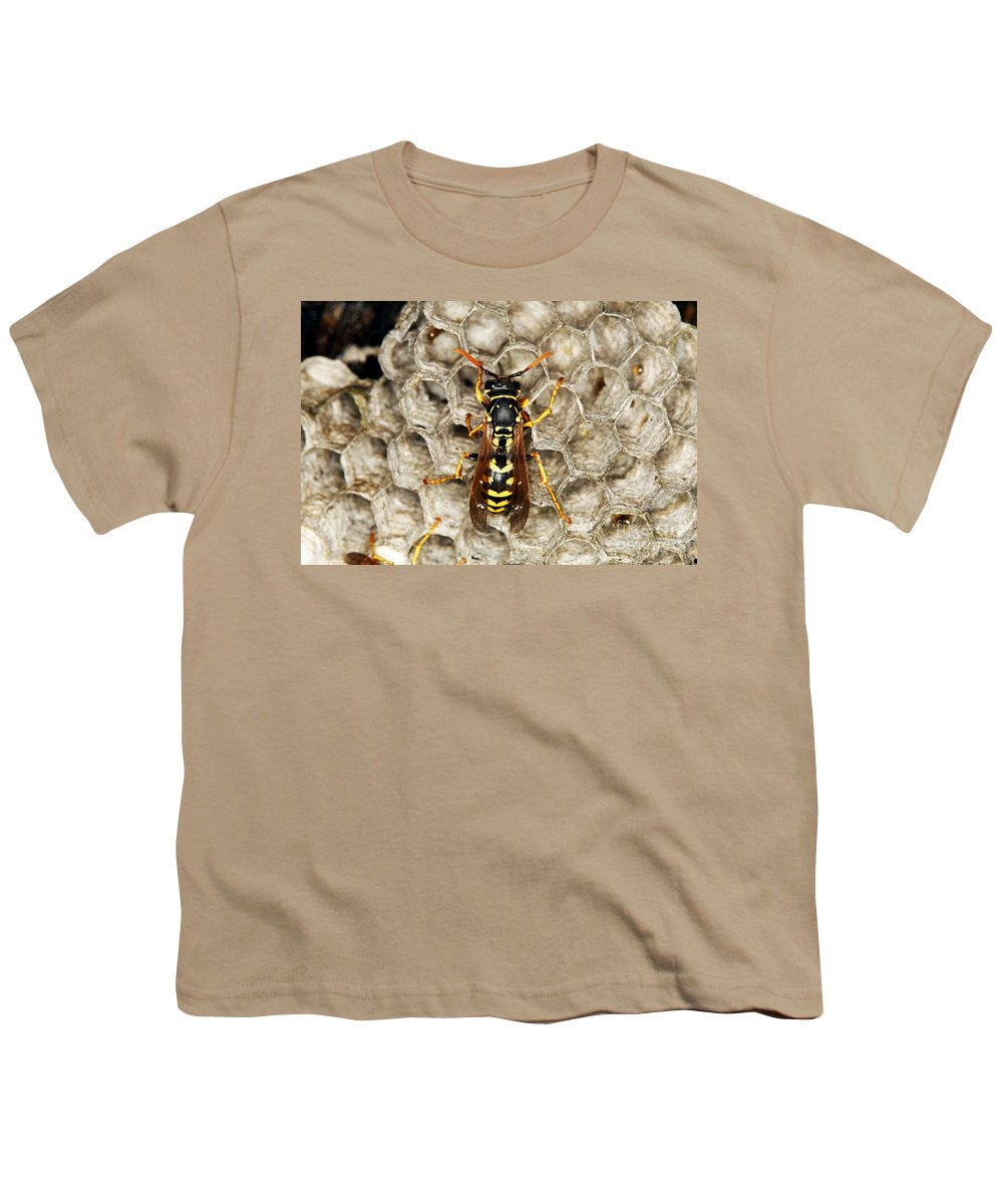 European Hornet Youth T-Shirts