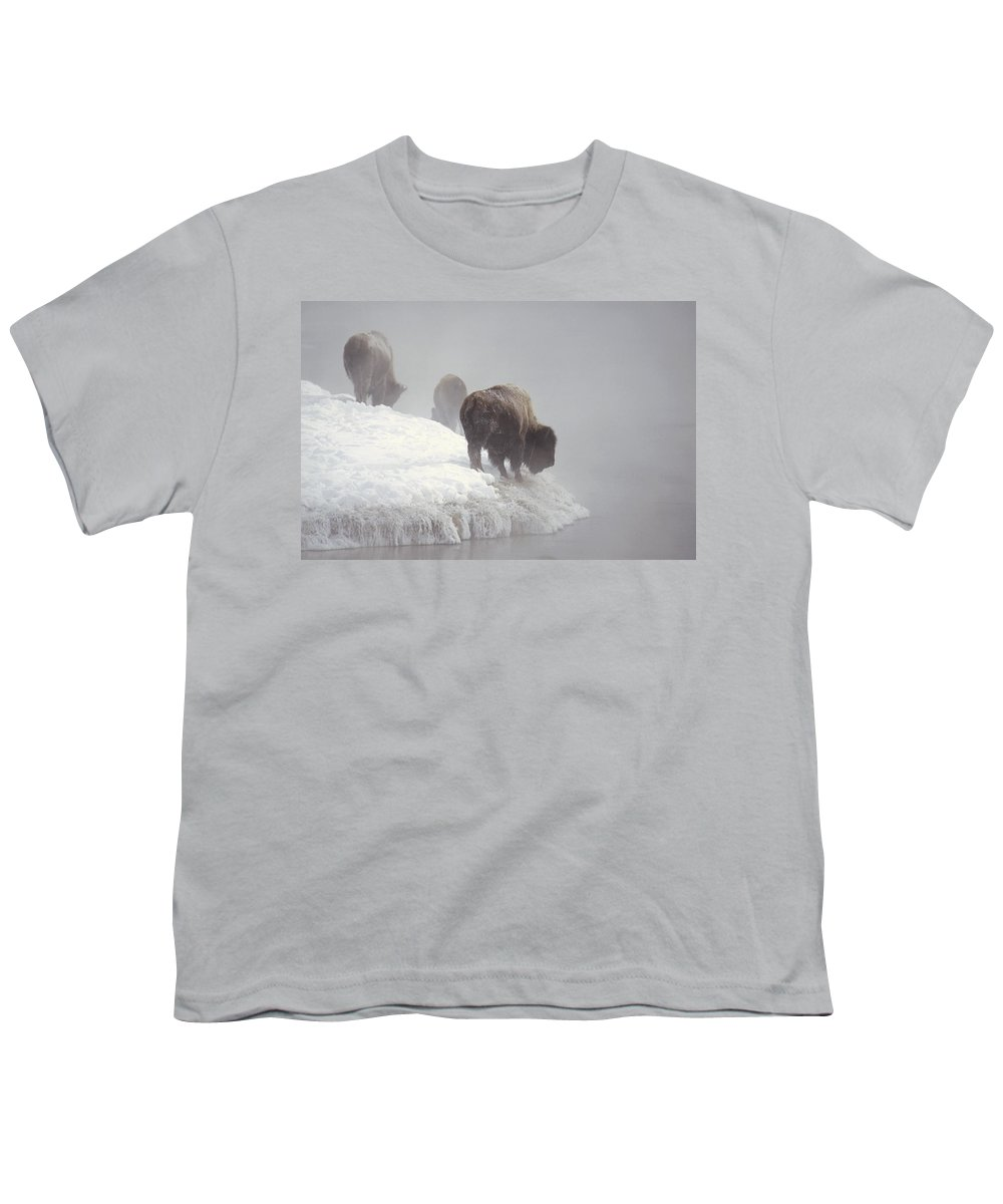 Feb0514 Youth T-Shirt featuring the photograph Bison Along Snowy Riverbank Yellowstone by Konrad Wothe