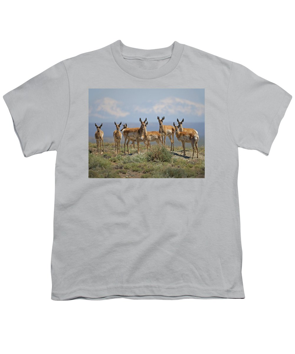 Antelope Youth T-Shirt featuring the photograph Antelope by Heather Coen