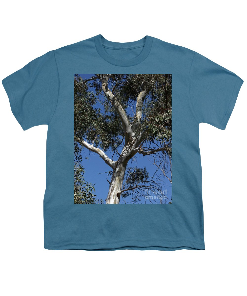 Trees Youth T-Shirt featuring the photograph Eucalyptus by Kathy McClure