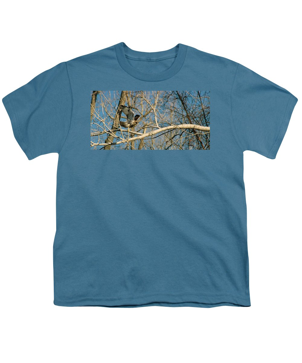 Hawk Youth T-Shirt featuring the photograph Hawk by Steve Karol