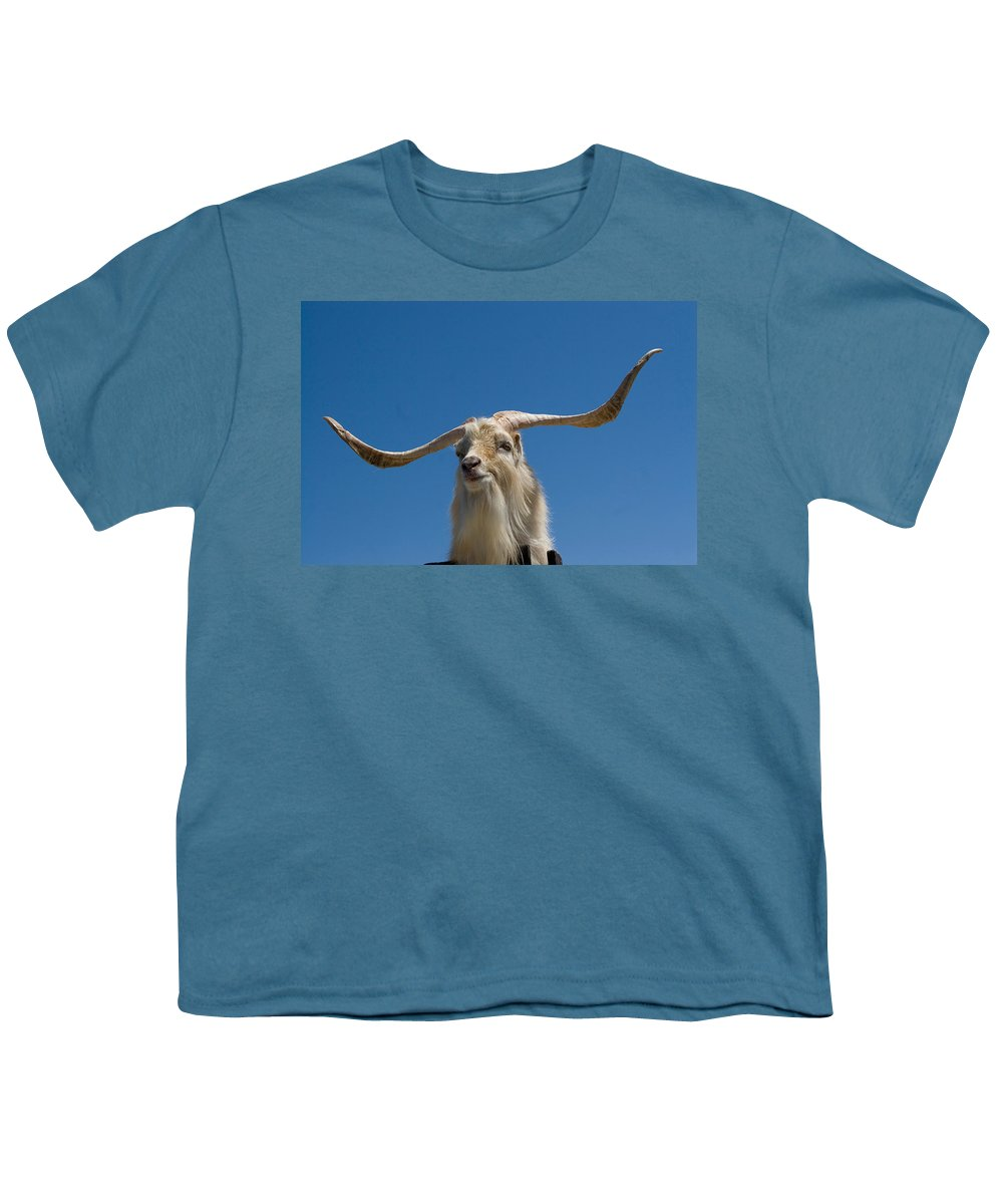 Animal Youth T-Shirt featuring the photograph Little-eared Goat by David Hosking