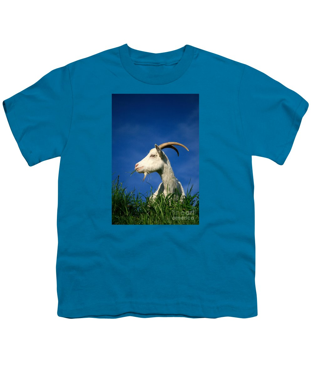 Animals Youth T-Shirt featuring the photograph Goat by Gaspar Avila