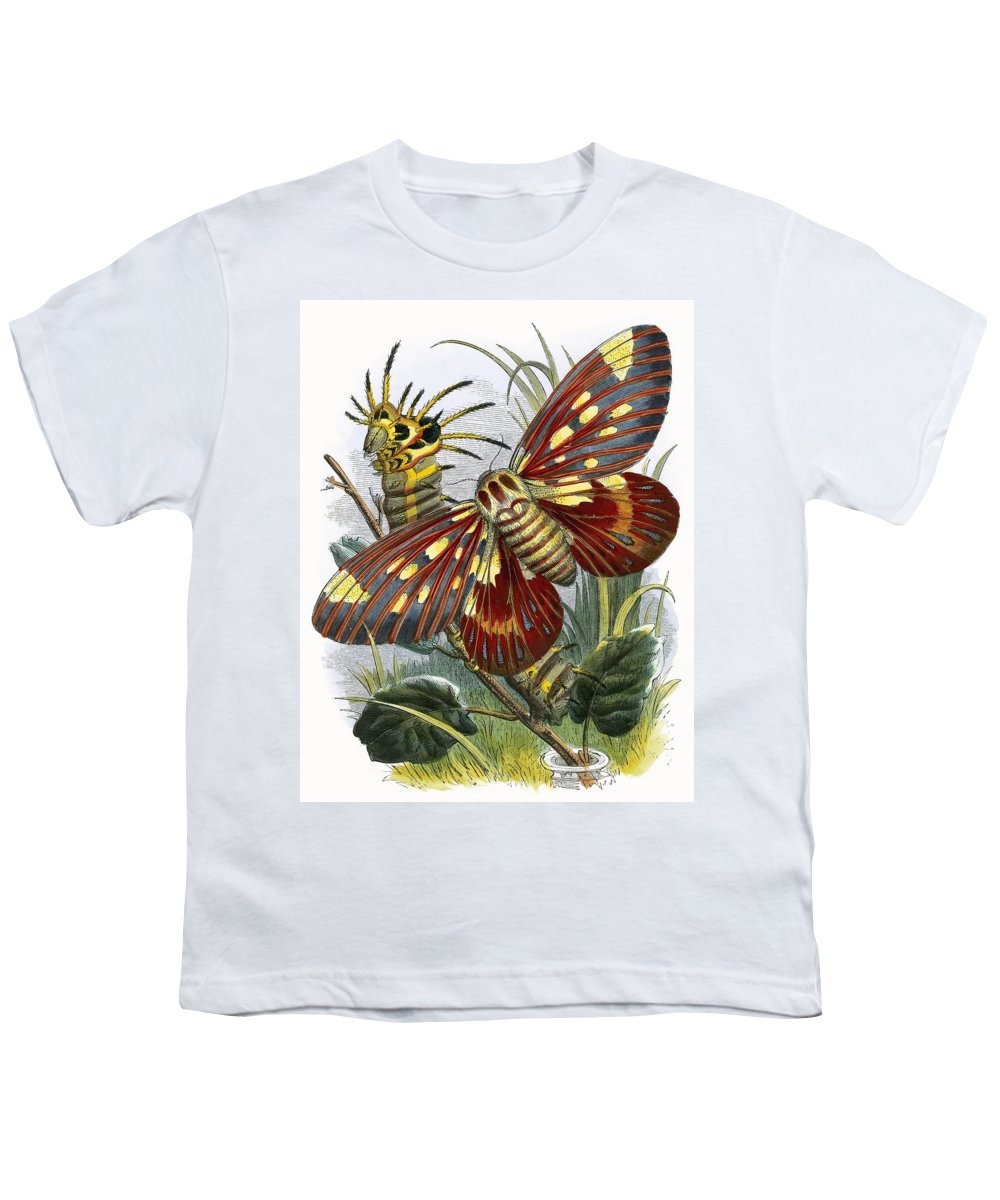 The Butterfly Vivarium Youth T-Shirt featuring the painting The Butterfly Vivarium by English School