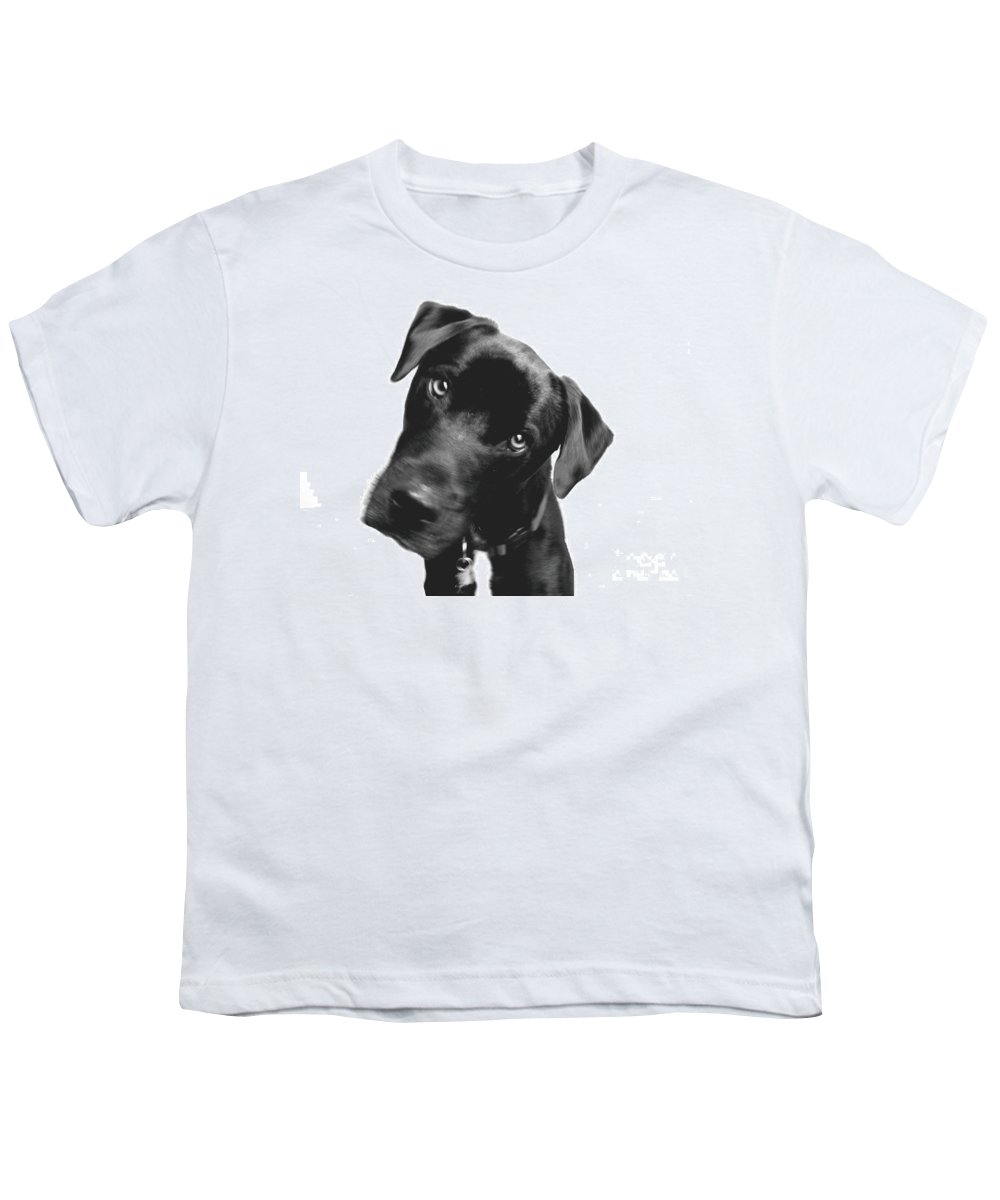 Labrador Youth T-Shirt featuring the photograph What by Amanda Barcon