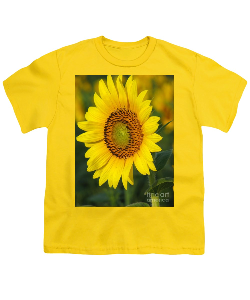Sunflowers Youth T-Shirt featuring the photograph Sunflower by Amanda Barcon