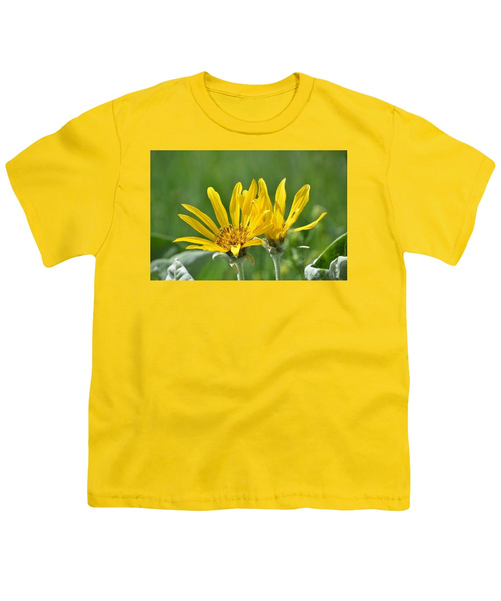 Yellow Youth T-Shirt featuring the photograph Two Groundsels by Norman Burnham