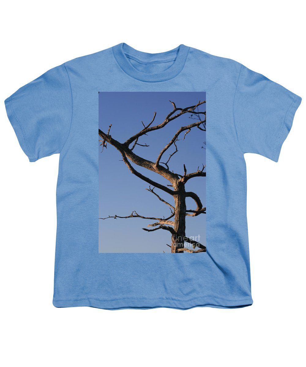 Tree Youth T-Shirt featuring the photograph Gnarly Tree by Nadine Rippelmeyer