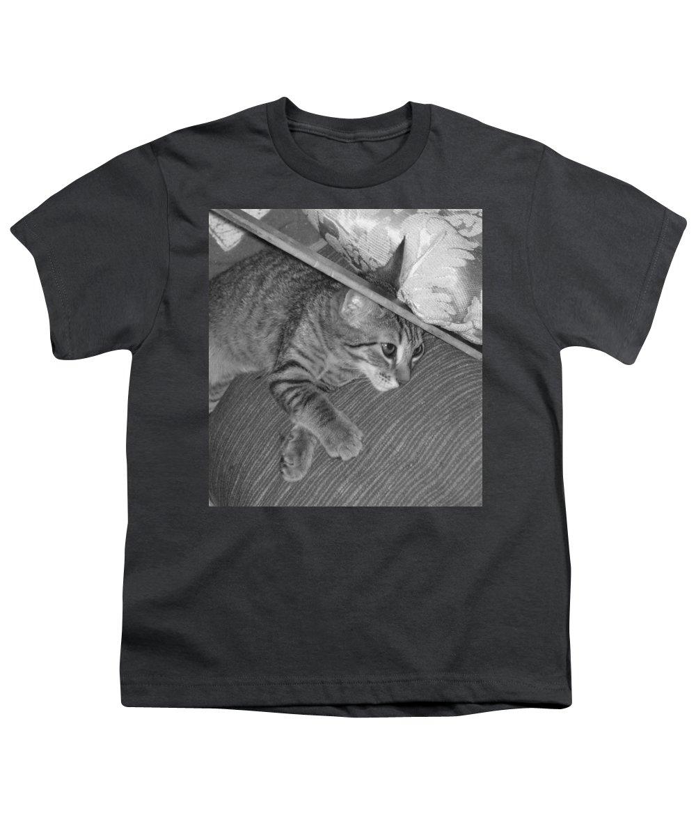 Kitten Youth T-Shirt featuring the photograph Model Kitten by Pharris Art