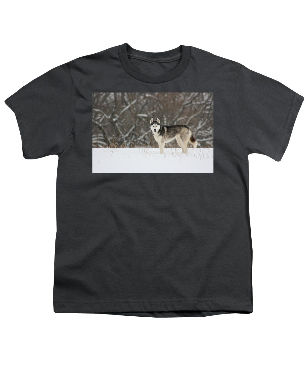 Landscape Youth T-Shirt featuring the photograph Siberian Husky 20 by David Dunham
