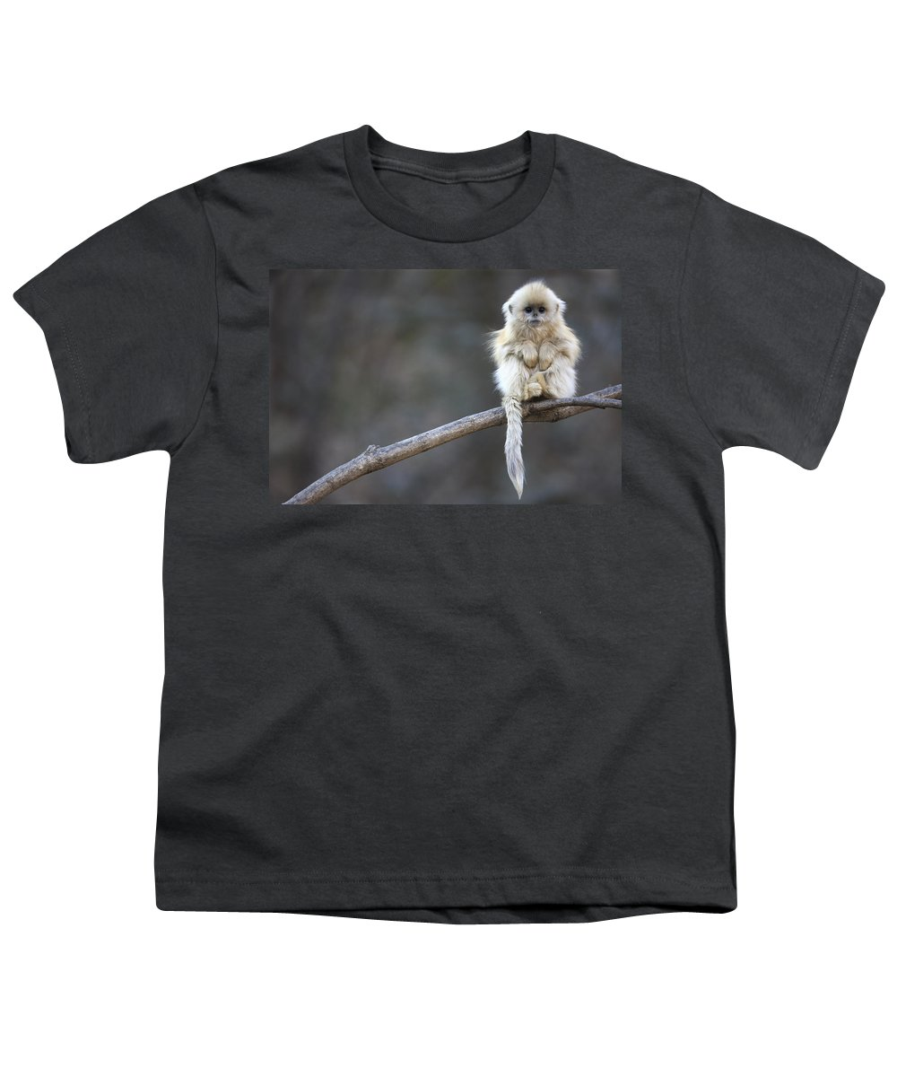 Mp Youth T-Shirt featuring the photograph Golden Snub-nosed Monkey by Cyril Ruoso