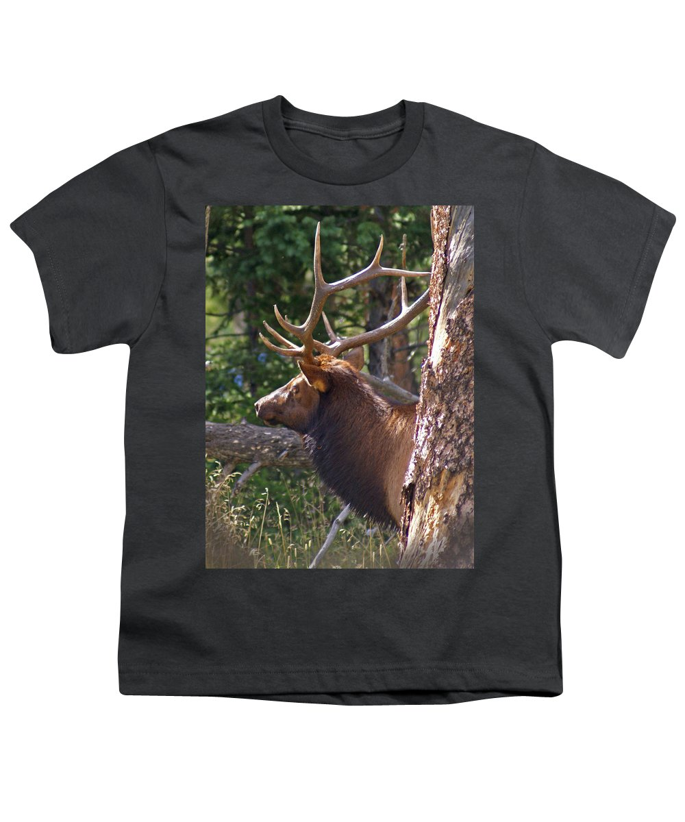 Elk Youth T-Shirt featuring the photograph Bull Elk 2 by Heather Coen