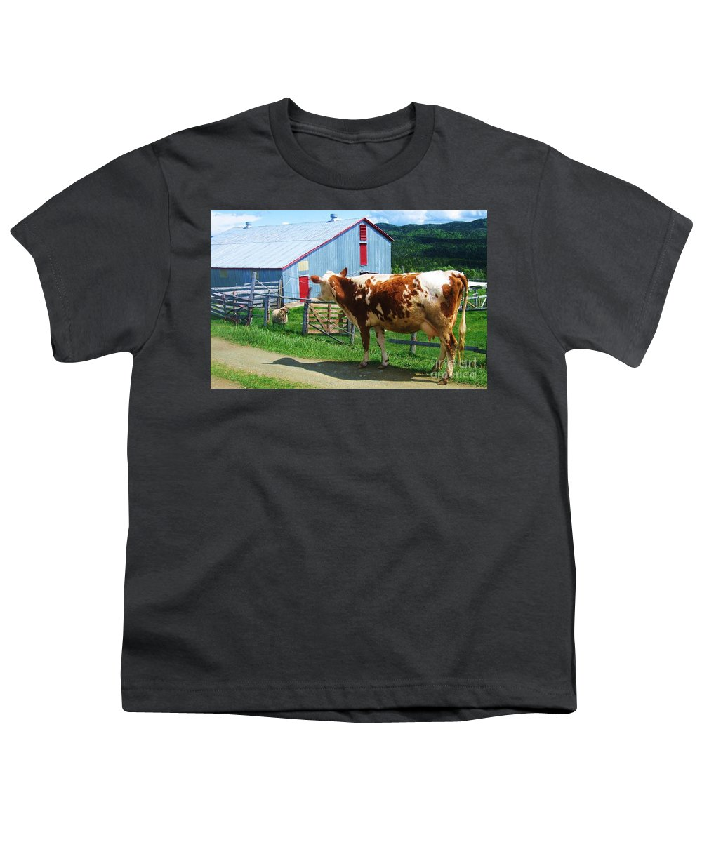 Photograph Cow Sheep Barn Field Newfoundland Youth T-Shirt featuring the photograph Cow Sheep And Bicycle by Seon-Jeong Kim