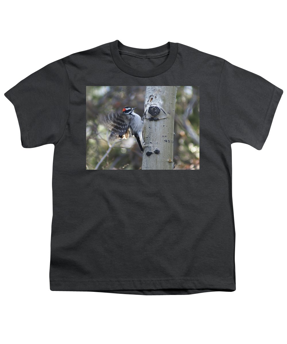 Woodpecker Youth T-Shirt featuring the photograph Downy Woodpecker by Heather Coen