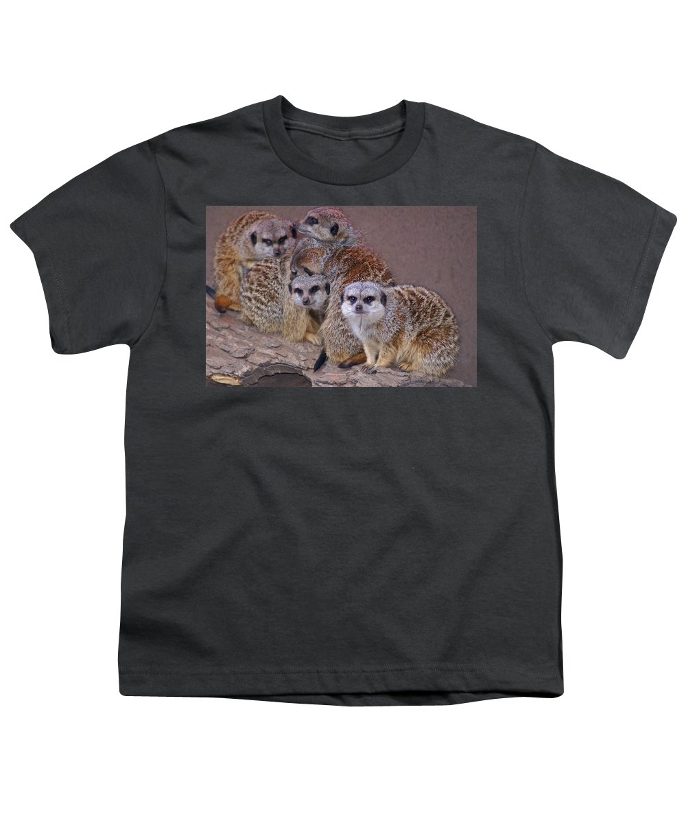 Mer Cats Youth T-Shirt featuring the photograph Freezing Meer Cats by Heather Coen