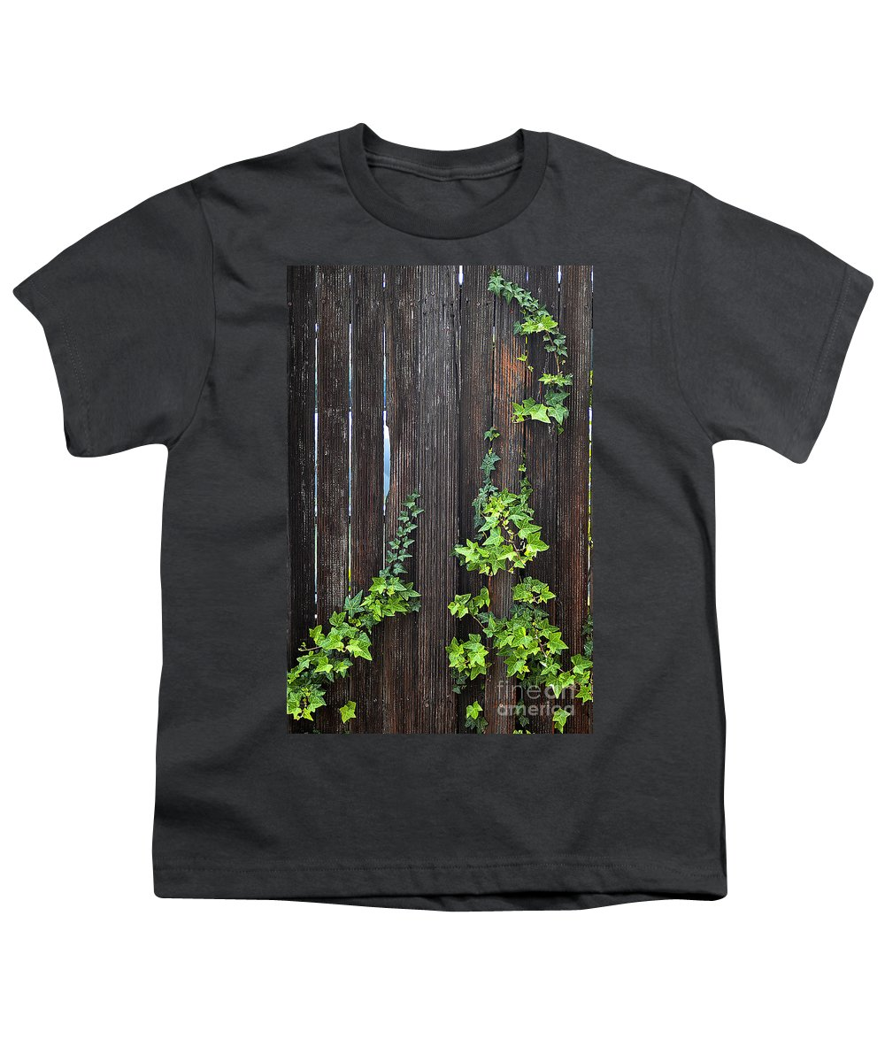 Clay Youth T-Shirt featuring the photograph Ivy On Fence by Clayton Bruster