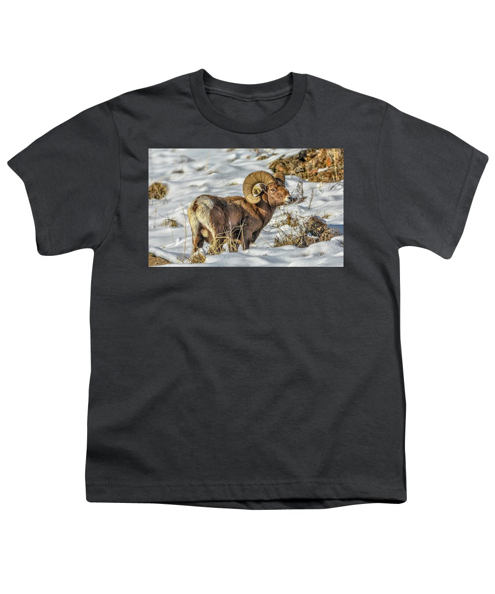 Bighorn Ram Youth T-Shirt featuring the photograph Wintering Bighorn by Jason Brooks