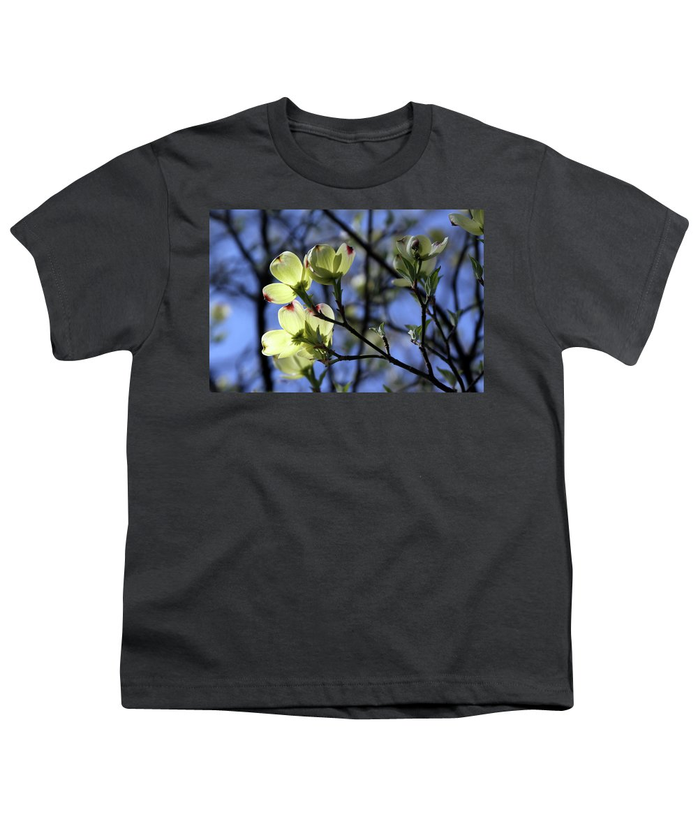 Dogwood Tree Youth T-Shirt featuring the photograph Dogwood in Sunlight by John Lautermilch