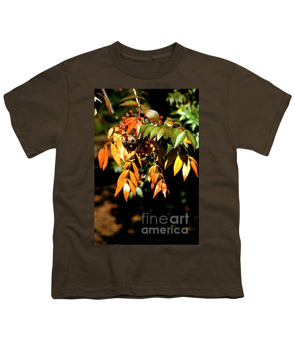 Fall Color Youth T-Shirt featuring the photograph Fall Leaves by Kathy McClure