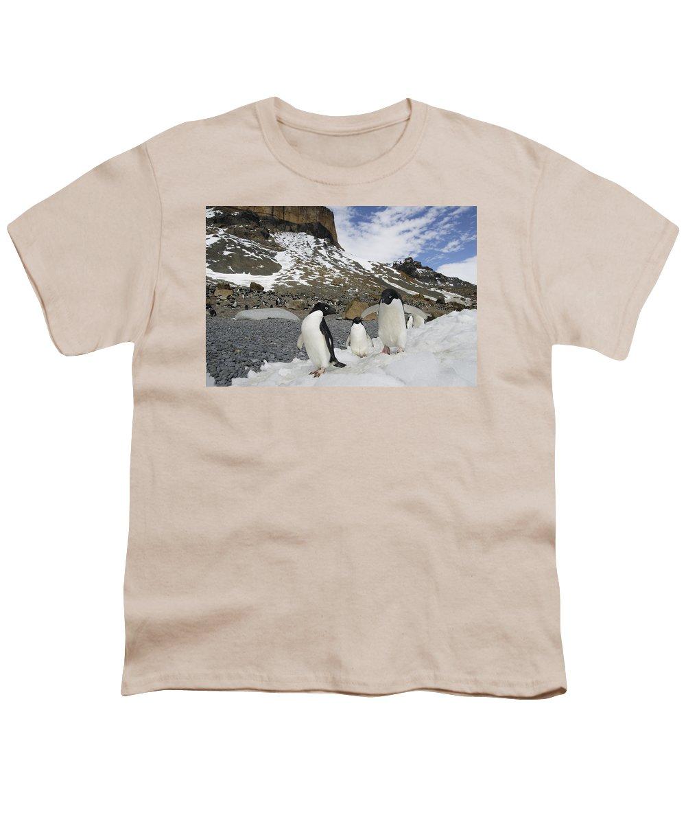 Feb0514 Youth T-Shirt featuring the photograph Adelie Penguin Trio Walking Antarctica by Hiroya Minakuchi