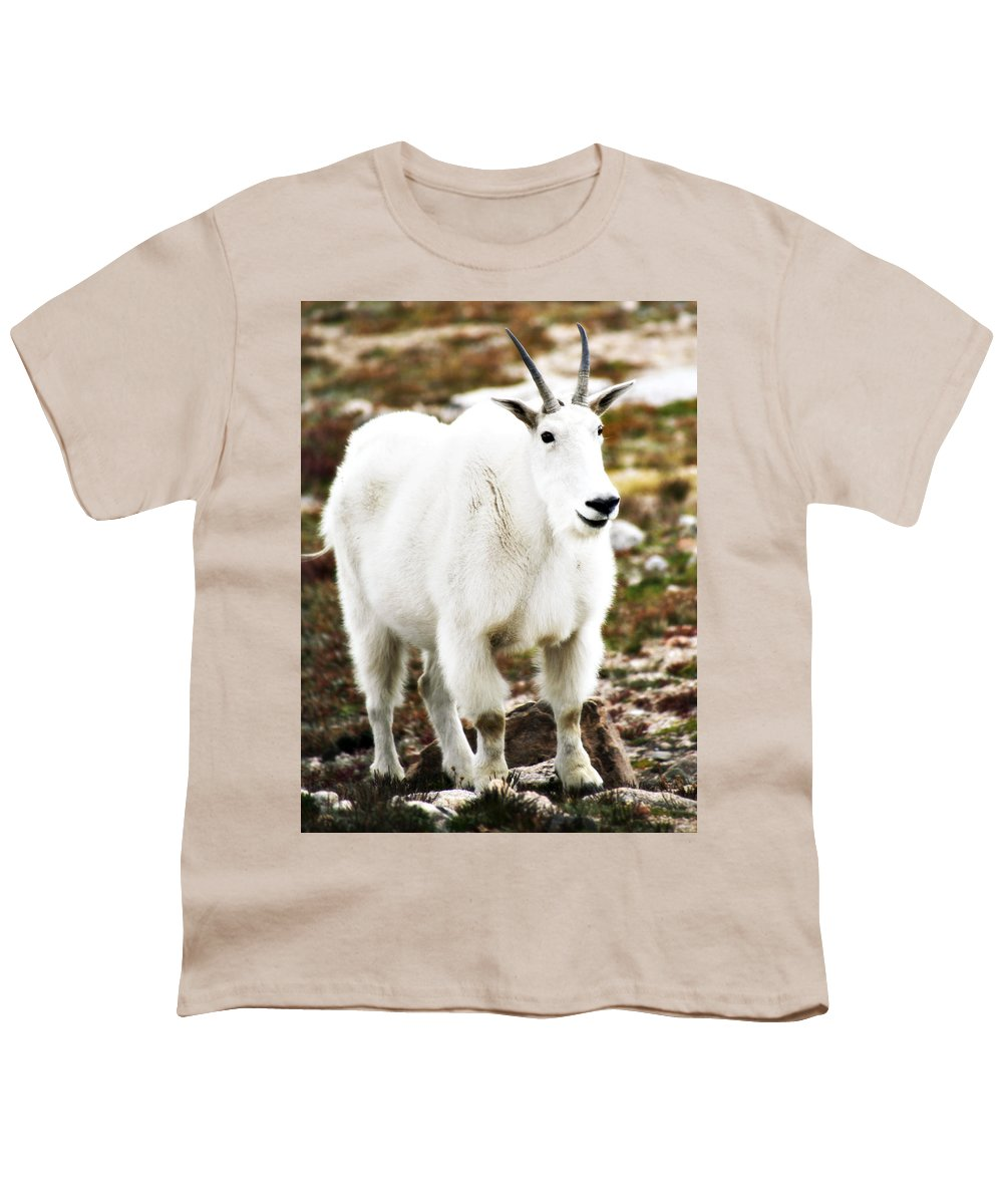 Animal Youth T-Shirt featuring the photograph Mountain Goat by Marilyn Hunt