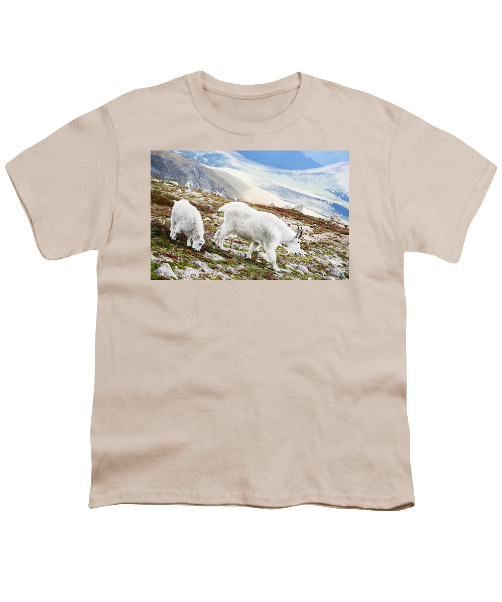 Mountain Youth T-Shirt featuring the photograph Mountain Goats 1 by Marilyn Hunt