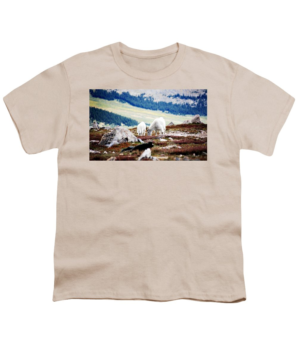 Animal Youth T-Shirt featuring the photograph Mountain Goats 2 by Marilyn Hunt