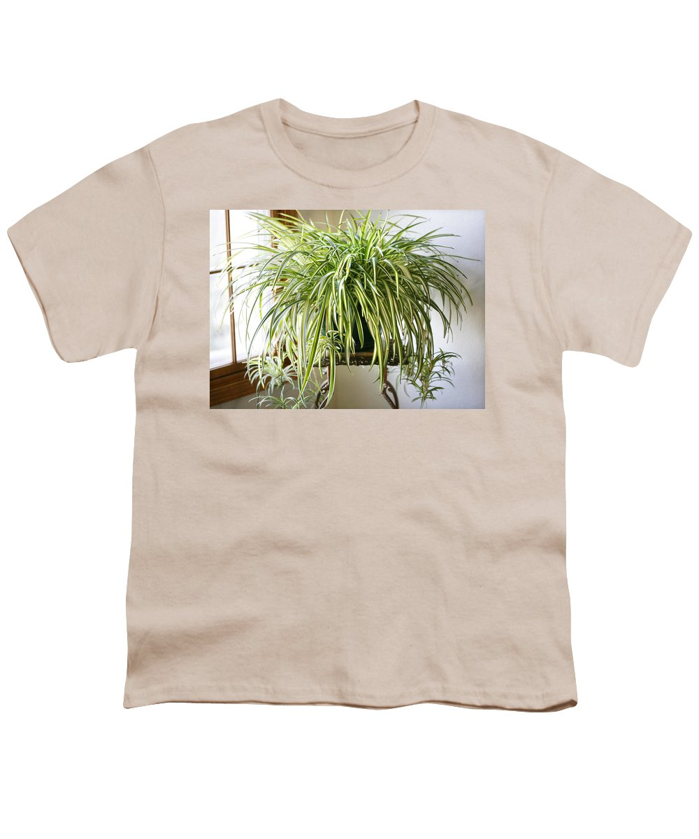 Spider Plant Youth T-Shirt featuring the photograph Spider Plant by Marilyn Hunt