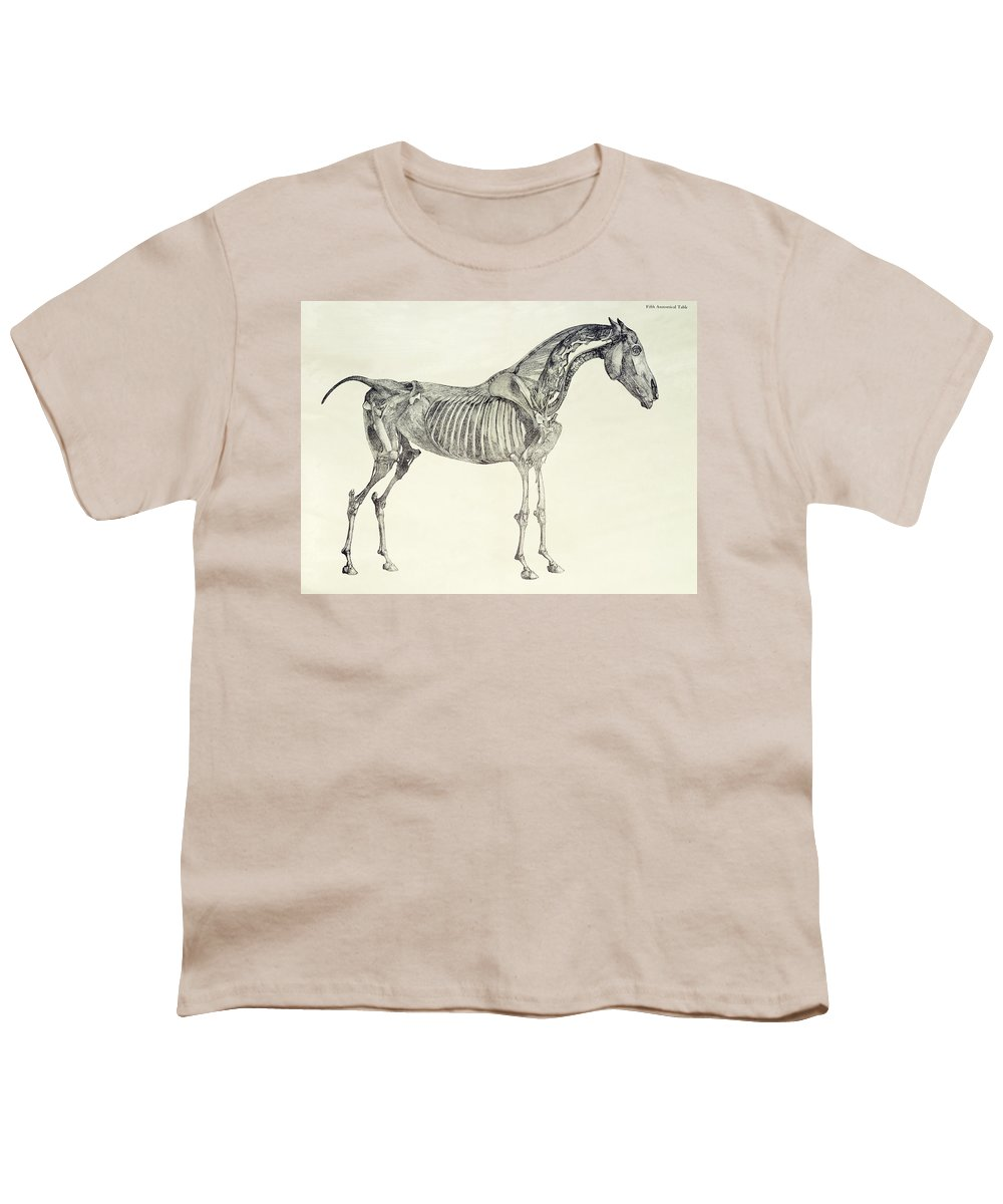 The Anatomy Of The Horse Youth T-Shirt for Sale by George Stubbs