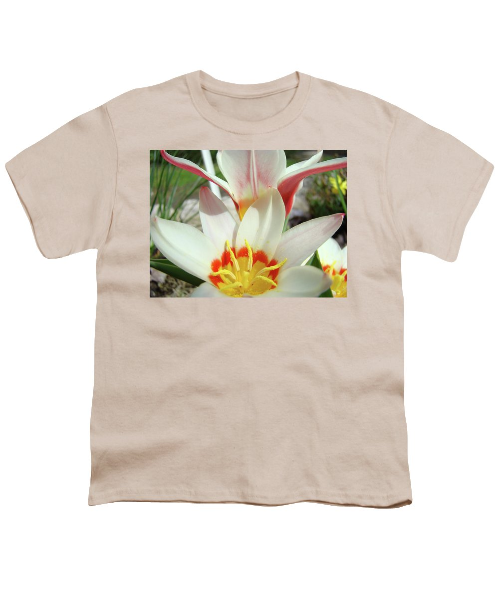 �tulips Artwork� Youth T-Shirt featuring the photograph Tulips Flowers Artwork 1 Tulip Flower Art Prints Spring Floral Art White Tulips Garden by Baslee Troutman