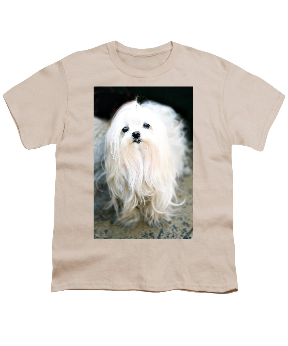 Small Youth T-Shirt featuring the photograph White Fluff by Marilyn Hunt