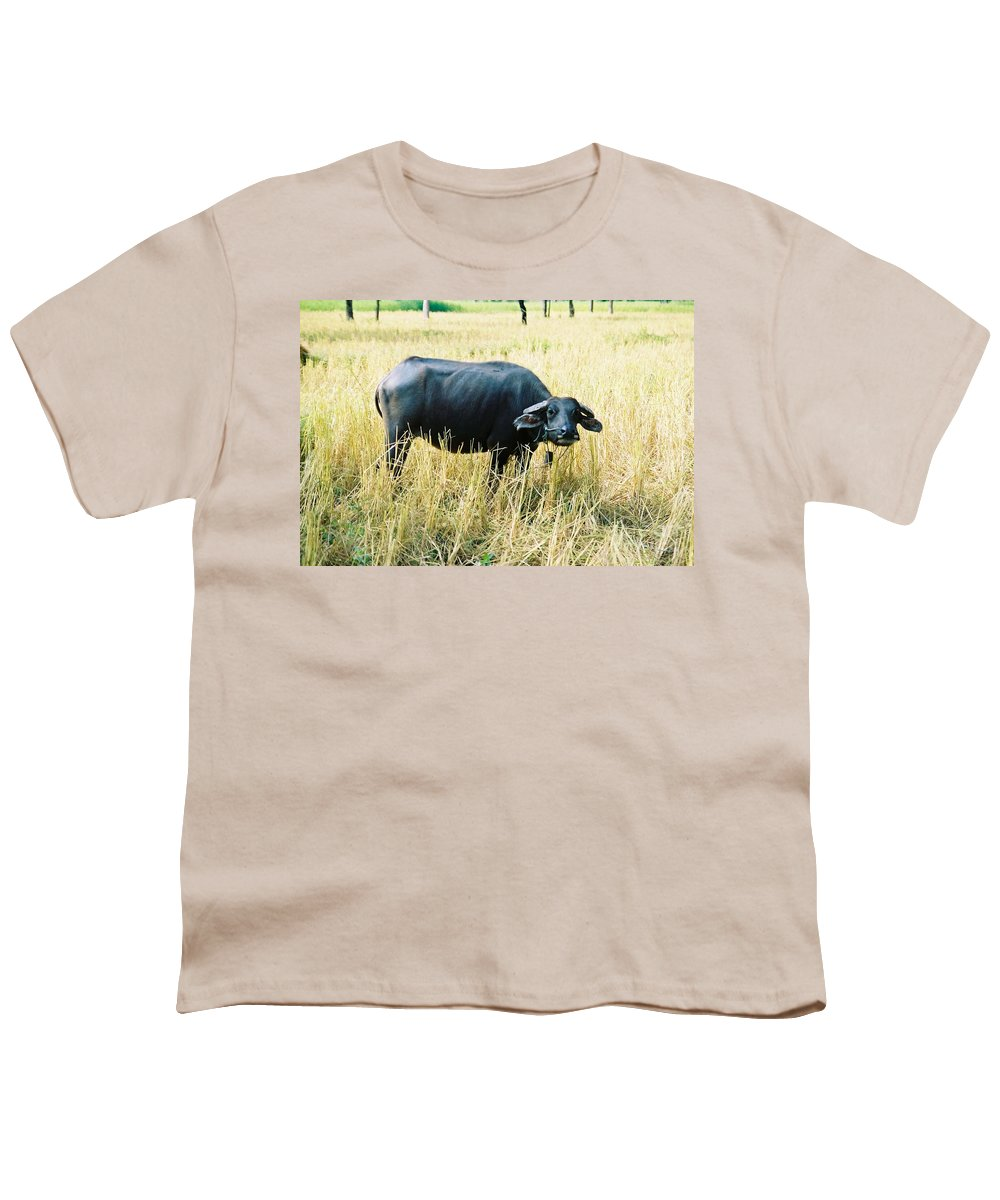 Water Buffalo Youth T-Shirt featuring the photograph You Lookin At Me by Mary Rogers