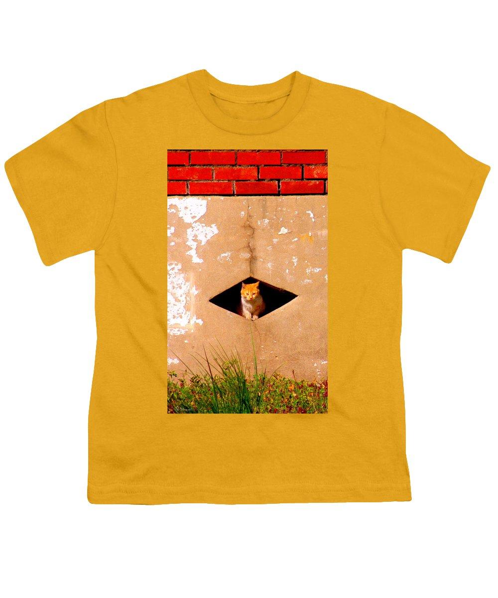 Cat Youth T-Shirt featuring the photograph Diamond Kitty by Albert Stewart