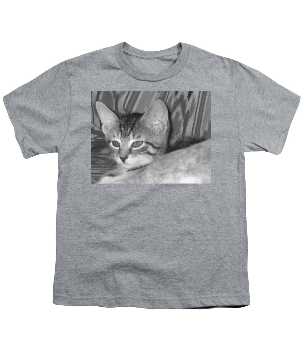 Kitten Youth T-Shirt featuring the photograph Comfy Kitten by Pharris Art