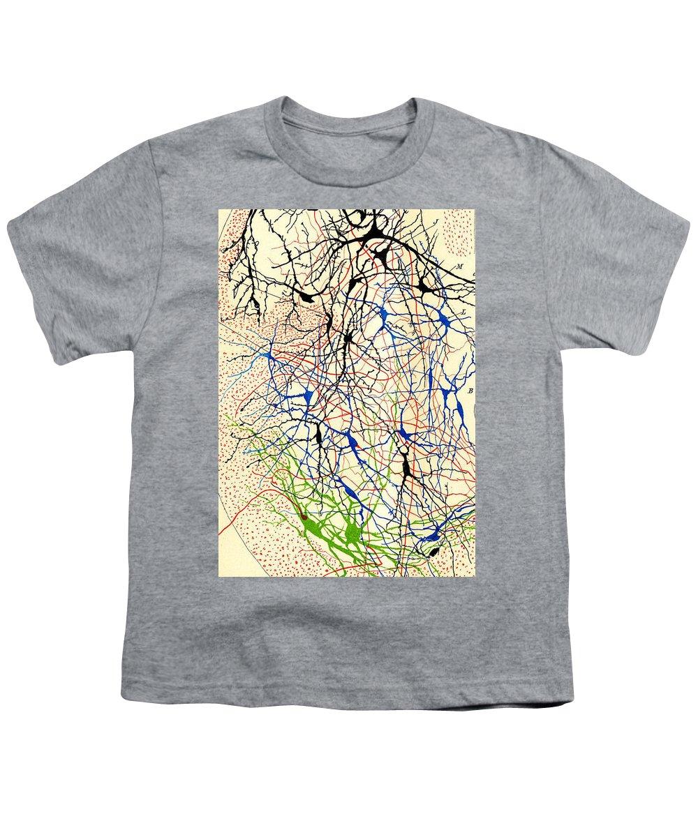 Histology Youth T-Shirts